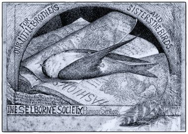Logo for Selborne Society's Plumage Section