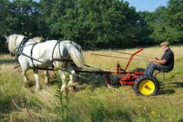 Shire horses mowing Paddock