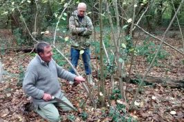 Clive Leeke coppicing course